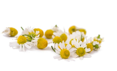 chamomile flower: Medical Chamomile isolated on white background Stock Photo
