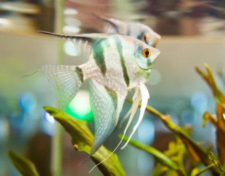 fish swimming in an aquarium photo