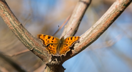 admiral: butterfly on the tree in late autumn Stock Photo