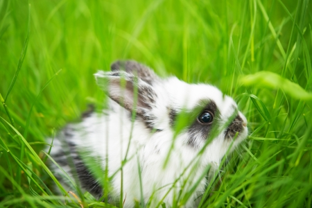 Baby white rabbit in green grass photo