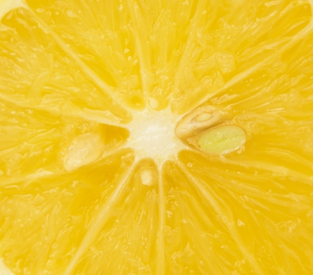 close up of a sliced lemon photo