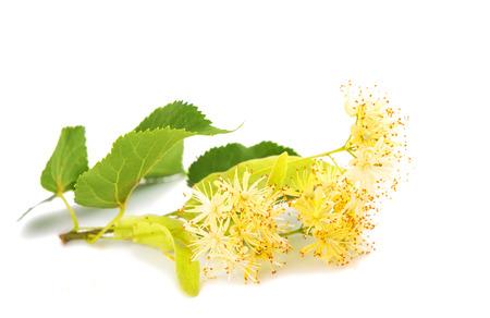 minutiae: linden flowers isolated on white background Stock Photo