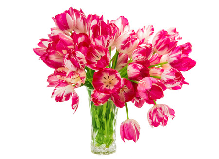 matherday: tulips in a vase isolated on white