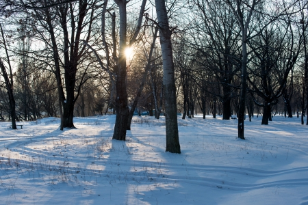 Winter landscape in a sunny day in the park photo