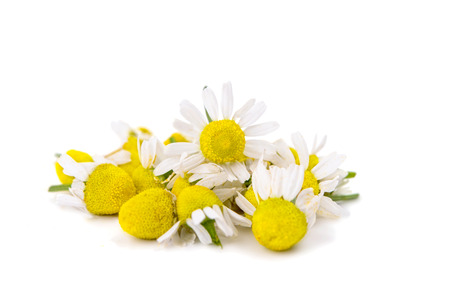 matricaria recutita: medical daisy isolated on white  Stock Photo