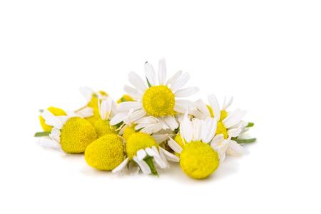 medische daisy op wit wordt geïsoleerd