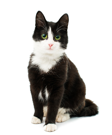 Black & white cat sit on white isolated background.