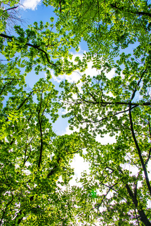 spring landscape of trees against the sky photo
