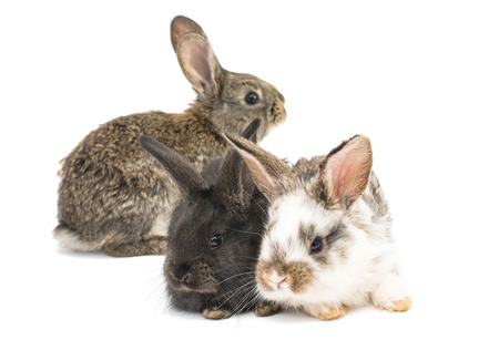 little rabbits on white background photo