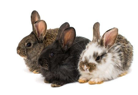 hz: little rabbits on white background Stock Photo