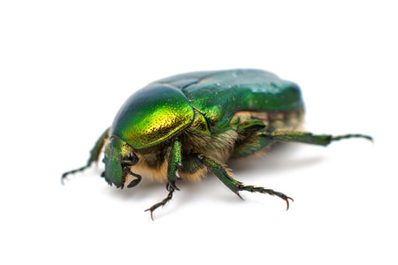 green beetle on a white background photo