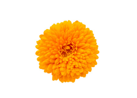 Marigold Flower - Beautiful Calendula officinalis Isolated on White Background. Top view photo