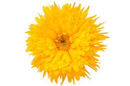 marigold isolated on white background Stock Photo