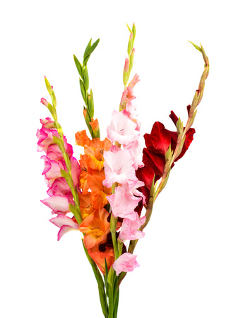 gladiolus: gladiolus isolated on white background
