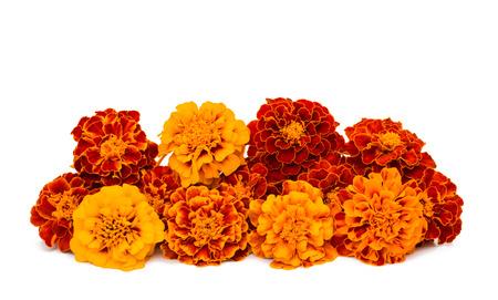 destination wedding: Marigold flower on a white background Stock Photo