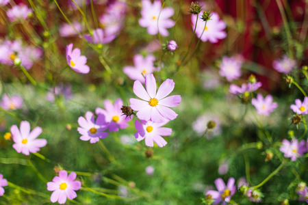 stamin: little pink flowers growing.