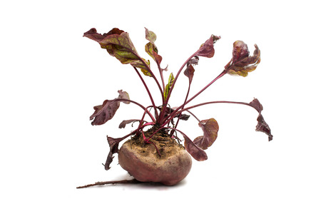 red beet with leaves on a white background photo