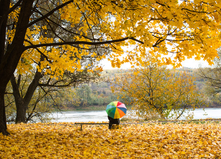 A colorful umbrella in the rain in yellow fall leaves Stock Photo