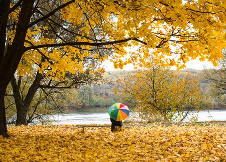 gay men: Un paraguas de colores en la lluvia en las hojas amarillas de otoño