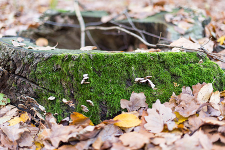 moss-covered tree stump in the forest photo