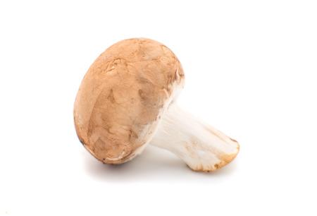 mushroom on a white background Imagens