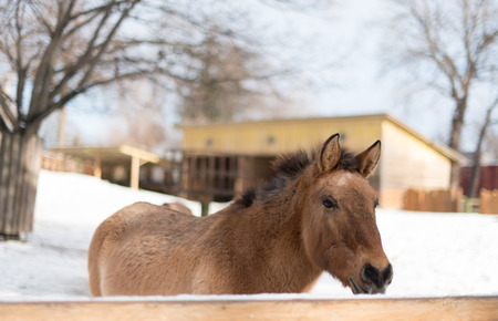 toed: horse at the zoo Stock Photo