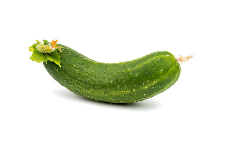 english cucumber: green cucumber on a white background