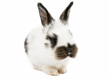jhy: little rabbit on a white background Stock Photo