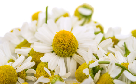 Medical daisy on a white background photo
