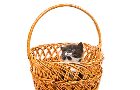 kitten in a basket on a white background photo