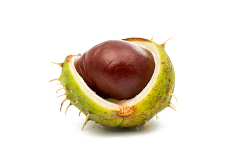 conkers: fruit chestnut on a white background Stock Photo