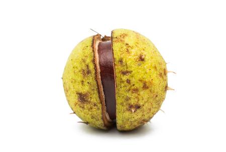 horse chestnut seed: fruit chestnut on a white background Stock Photo