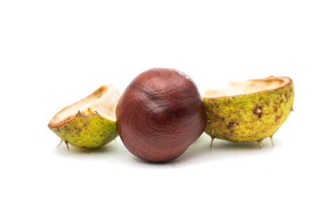 conker: fruit chestnut on a white background Stock Photo