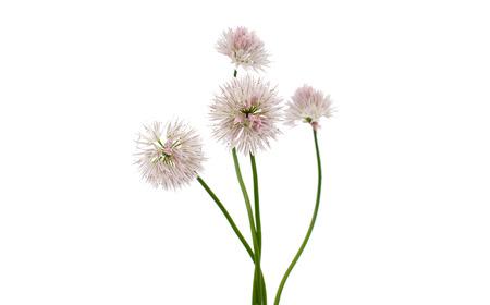 descriptive colours: flowers on a white background