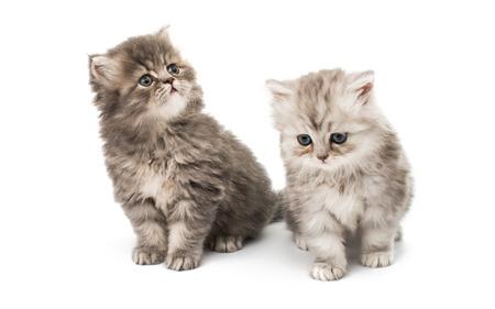 kitten: beautiful fluffy little kittens on a white background Stock Photo