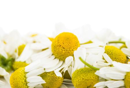 marguerite: Daisy Medical sur un fond blanc