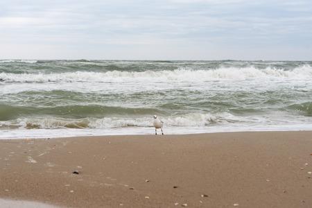 relentless: storm at sea Stock Photo