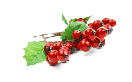 winterberry: winterberry Christmas branch with red holly berries