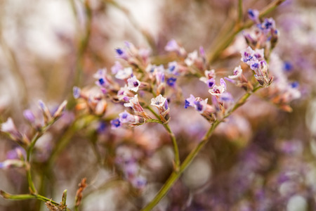 petites fleurs: Arrière-plan de petit champ de fleurs