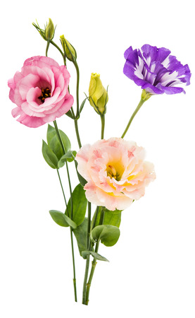 bunch of: eustoma flower on a white background