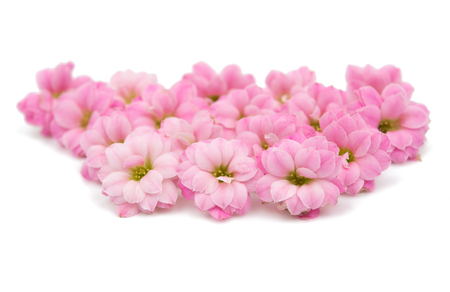 delicate: delicate pink flowers on a white background Stock Photo