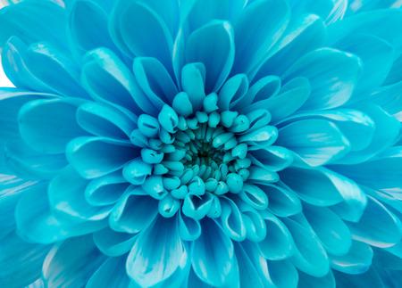 Beautiful Dahlia Flower head Macro Banque d'images
