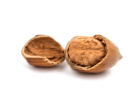 hazel nut: hazel nut on a white background Stock Photo