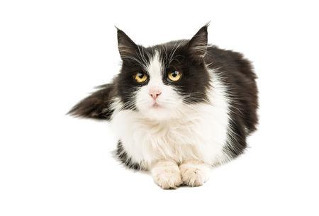 k9: black and white cat on a white background