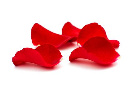 rosas rojas: Pétalos de rosa roja sobre fondo blanco  Foto de archivo