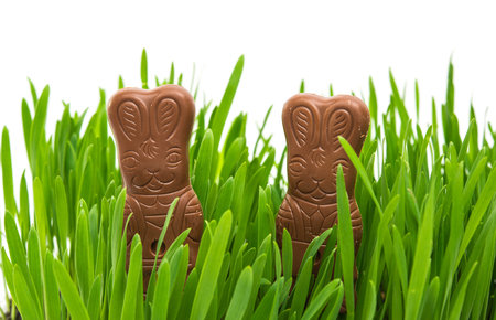 eastertime: chocolate bunny in green grass on a white background