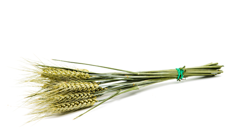 wheat kernel: Wheat ears isolated on white background