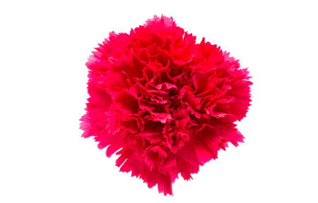 gillyflower: carnation flower isolated on white background