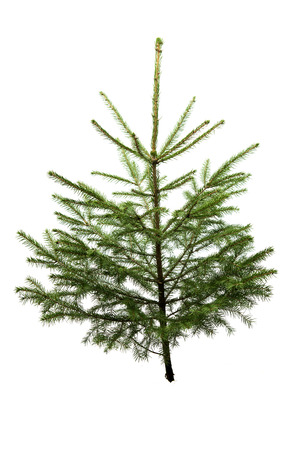 adorned: Fir tree for Christmas, not adorned, isolated on white without shadow