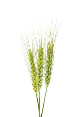 wheat kernel: Green wheat ears isolated on white background